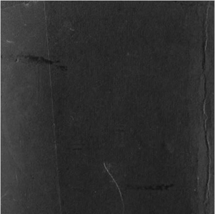 octopus-logo